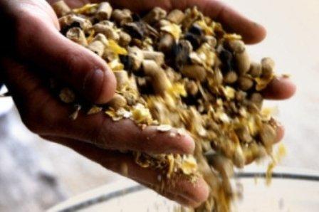 mangimi Scandalo della carne, lUE riammette le farine animali nellalimentazione degli animali