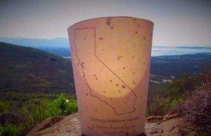 tazza biodegradabile