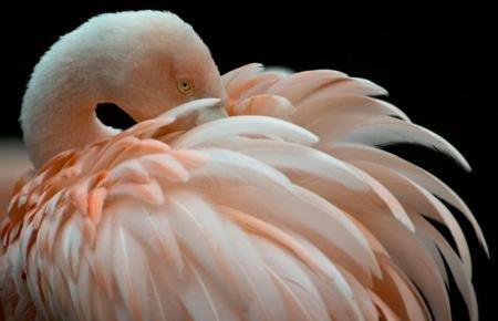 Venezia, il ritorno dei fenicotteri rosa