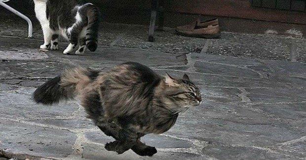 Le improvvise corse pazze del gatto: a cosa sono dovute?