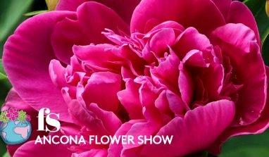 EVENTI – L'1 e il 2 aprile torna l'Ancona Flower Show