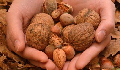 Combattere la stanchezza grazie al cibo: ecco cosa mangiare in autunno