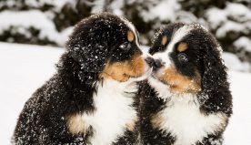 Gli animali ed il freddo: come proteggere i nostri amici a quattro zampe