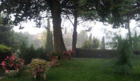 Inverno e pioggia: come proteggere il proprio giardino