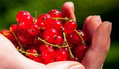I rimedi naturali per combattere e prevenire la cistite