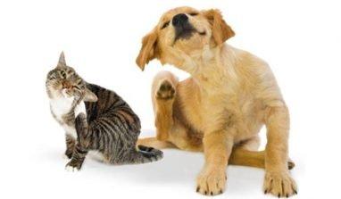 Togliere le pulci al proprio animale utilizzando metodi naturali: ecco come fare