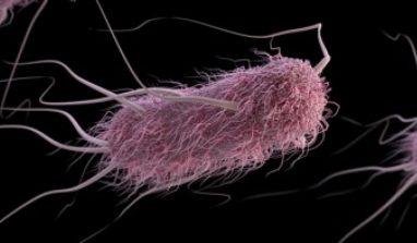 Cos'è l'Escherichia coli e come combatterla