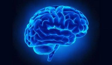 Quali sono i cibi migliori per mantenere il cervello sano?