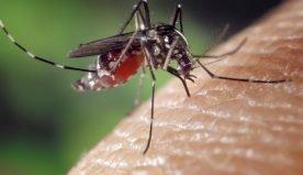 Come proteggersi delle zanzare durante l'estate?