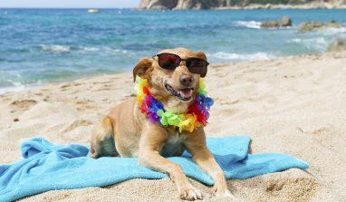 Vacanze con il cane: mare o montagna? Nessun problema!