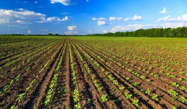 Agricoltura biologica, cos'è e perché è importante praticarla