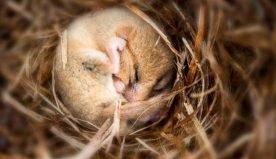 Animali che vanno in letargo: quali sono e quando ci vanno