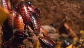 Malattie portate dagli scarafaggi: i 9 disturbi alla salute