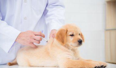 Vaccini per cani: quali fare per il benessere del proprio animale